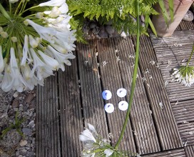 four white fabric nipples arranged in a square on faded grey decking, seen between blossoms of a whit agapanthus plant.
