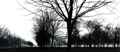 Black and white photograph of trees in Holland Park, London.