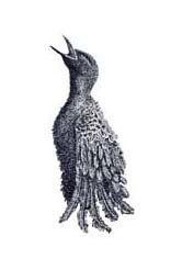 pen and ink drawing of a distressed bird