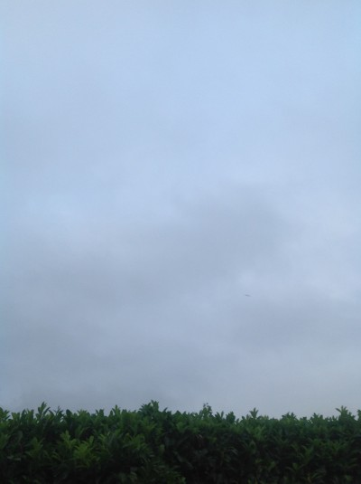 A mottled grey sky (looking faintly bluer on camera than in life), with a dark border, at the bottom, of waxy green leaves.